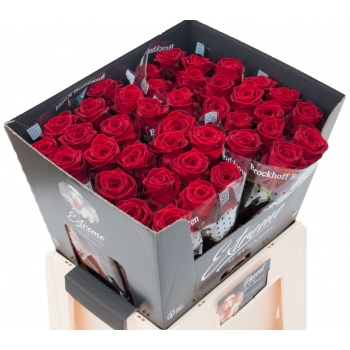 100 Rode Rozen boeket van grootbloemige Rozen