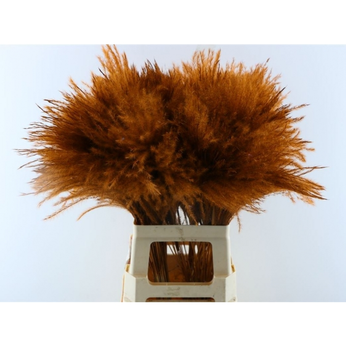 Fluffy Reed gras pluimen choco