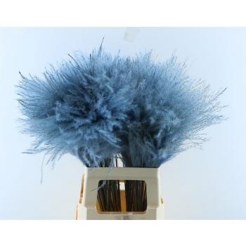Fluffy Reed gras pluimen licht blauw