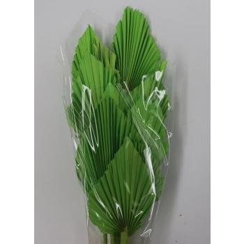 Palm Speer appel groen