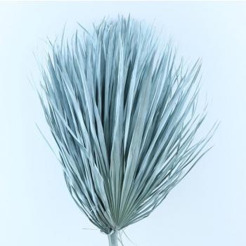 Chamaerops bladeren large licht blauw gedroogd
