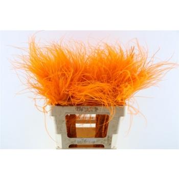 Gedroogde Stipa Pennata oranje toef van 60 cm