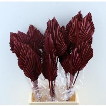 Palm Speer bordeaux