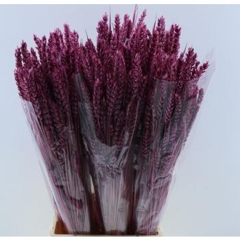 Gedroogde Tarwe lila 200 gram