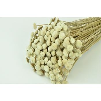 Botton Botao naturel geconserveerd 50 gram