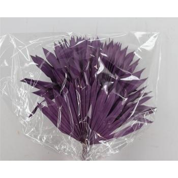 Sun Speer violet