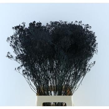 Gypsophila zwart geverfd gedroogd per 5 takken