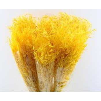 Gedroogde Haver Avena Salvaje gebleekt geel 200 gram