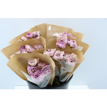 Pioen rozen roze gedroogd
