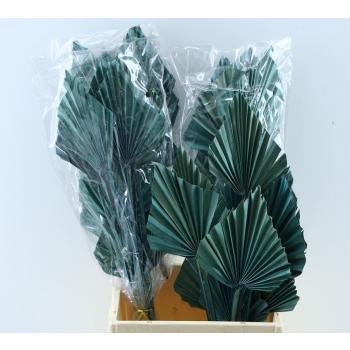 Palm Speer blauw