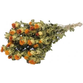 Gedroogde Carthamus oranje