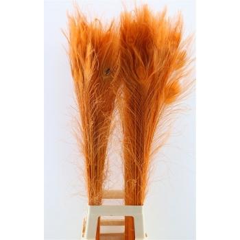 Pauwenveren met oog oranje lang