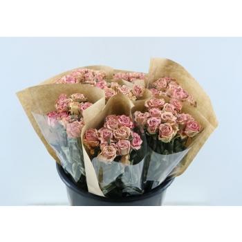 Gedroogde korte roze Rozen per bos van 10 Rozen