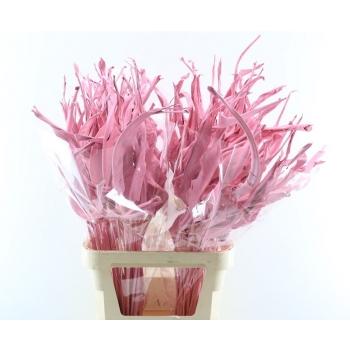 Strelizia blad gedroogd roze geverfd