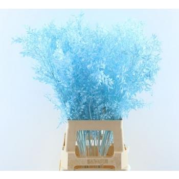 Ruscus geverfd licht blauw
