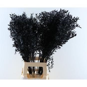 Ruscus geverfd zwart