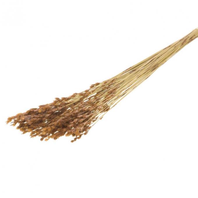 Gedroogde thatch reed