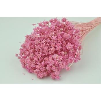 Hill flower gebleekt roze