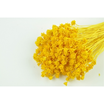 Hill flower gebleekt geel
