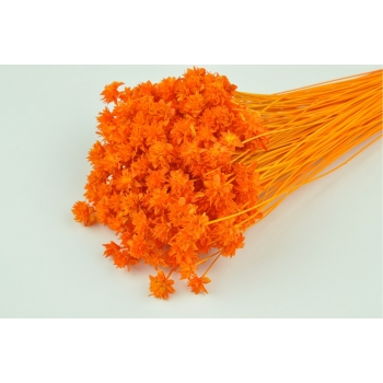 Hill flower gebleekt oranje