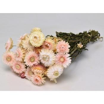 Gedroogde Helichrysum wit roze
