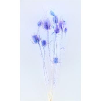 Gedroogde Kardoen Distel gebleekt violet