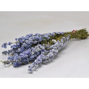 Gedroogde Delphinium ridderspoor licht blauw