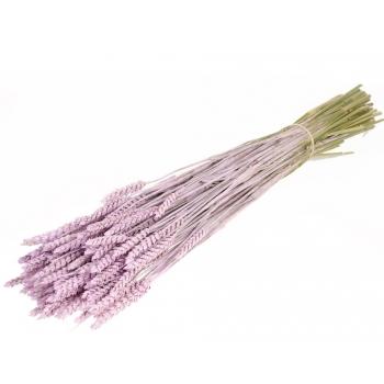 Gedroogde Tarwe lilac misty