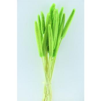 Babala licht groen