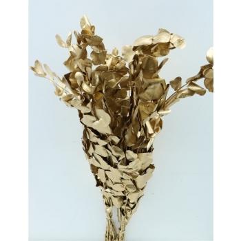 Eucalyptus Espiral goud gepreserveerd