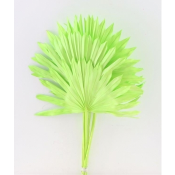Sun Speer appel groen