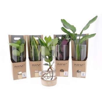 Groen plantje in een cilinderglas in een cadeaudoos met LED