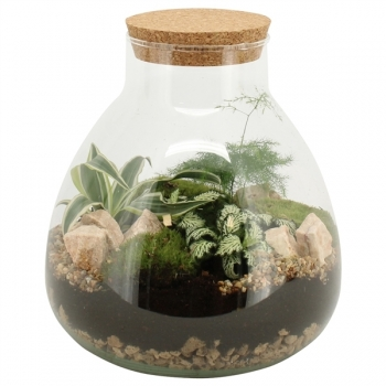 Terranium van plantjes in een bol glas met kurk
