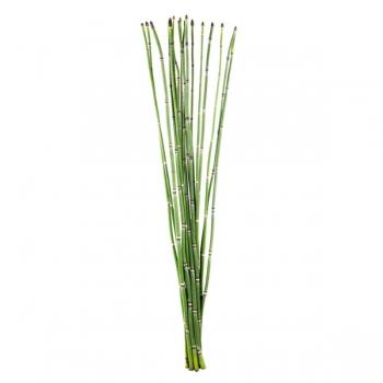 5 Bambou Snake