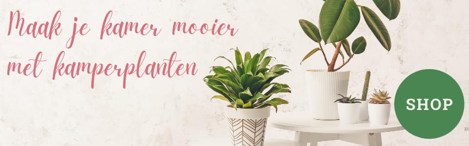 Planten bestellen bij Thuisbloemist