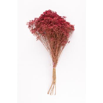 Gedroogde Broom bloom roze