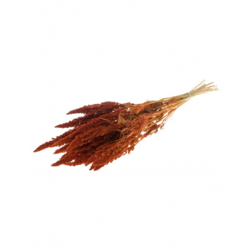 Amaranthus gedroogd Oranje
