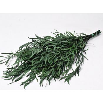 Eucalyptus Nicoly groen gepreserveerd