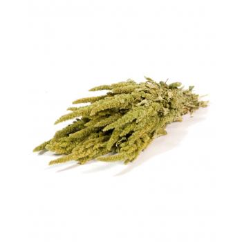 Gedroogde Amaranthus naturel groen