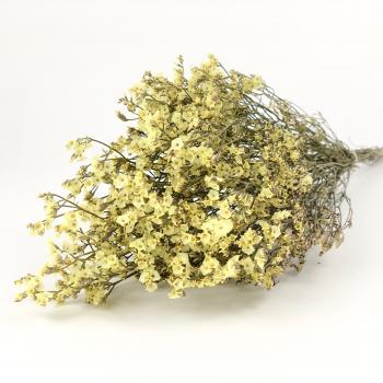 Gedroogde Limonium Diamond geel