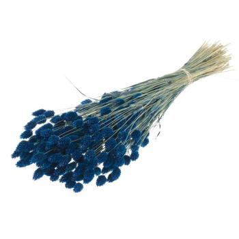 Gedroogde Phalaris gekleurd donker blauw