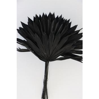 Gedroogde Palm Sun Spear zwart