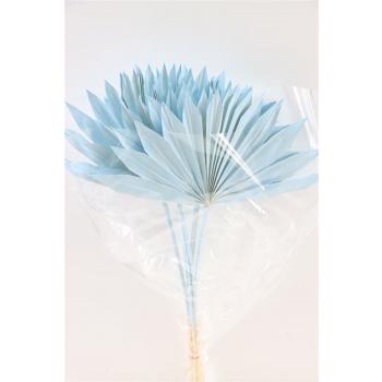Gedroogde Palm Sun Spear licht blauw