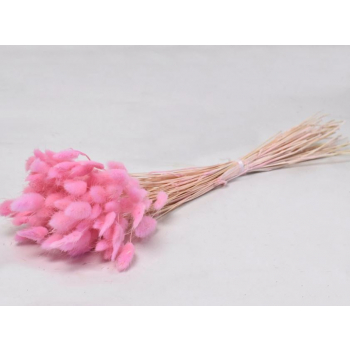 Gedroogde Lagurus Ovatus licht roze