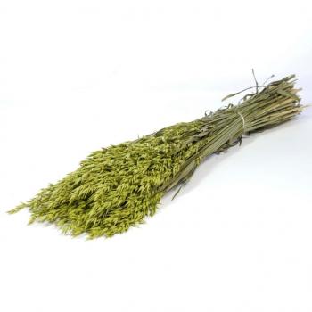 Gedroogde Haver (Avena) groen gekleurd