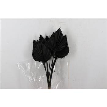 Gedroogd Palm Spear zwart