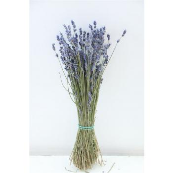 Gedroogde Lavendel naturel donker blauw