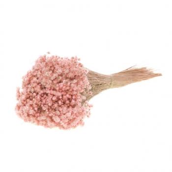 Gedroogde Marcela pink misty bloempjes